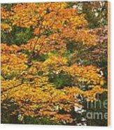 Mount Koya Koya San Japan  Wood Print