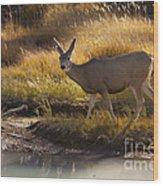Mule Deer   #3950 Wood Print