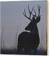 Mule Deer Buck At Sunset Wood Print