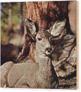 Mule Deer Doe Wood Print