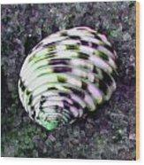 Nerita Versicolor Four-tooth Nerite Shell Wood Print