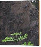 New Leaves Born On Old Tree Wood Print