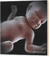 Newborn Wood Print