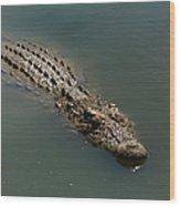 Nile Crocodile  Wood Print