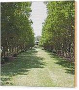 Norfolk Botanical Garden 2 Wood Print