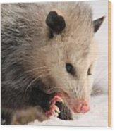 North American Opossum In Winter Wood Print