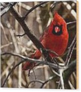 Northern Cardinal Male Wood Print