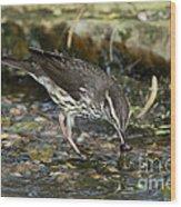 Northern Waterthrush Wood Print
