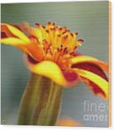 Novelty French Marigold Named Mr. Majestic Wood Print