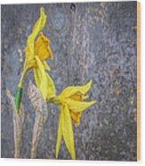 2 Old Daffodils Wood Print