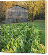 Old Tobacco Barn Wood Print by Brian Jannsen