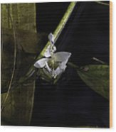 On Lily Pond Wood Print