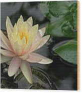 Once A Pond A Water Lily Wood Print