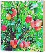 Orange Trees With Fruits On Plantation Wood Print