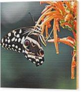 Orchard Swallowtail Wood Print
