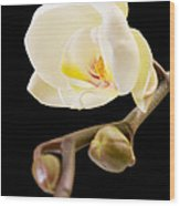 Orchid Wood Print by Ilze Lucero