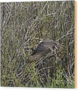 Osprey Taking Trout Wood Print