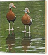 Pair Black-bellied Whistling-ducks Wood Print