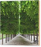 Palais Royal Trees Wood Print