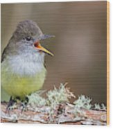 Pale-edged Flycatcher Wood Print