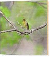 Palm Warbler Wood Print