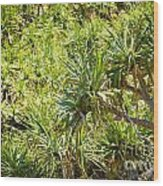Pandanus Palm Tree Wood Print