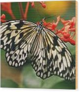 Paper Kite Butterfly Wood Print