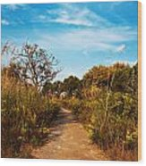 Pathway Through Colorful Fall Autumn Foliage Wood Print