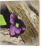 Peeking Violet Wood Print
