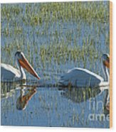 Pelicans In Hayden Valley Wood Print