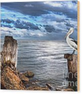 Pelican's Pride Wood Print by Shannon Rogers