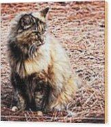 Pine Needle Kitty Wood Print