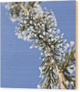 Pine Tree Branch Wood Print