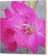 Pink Gladiola Wood Print by Cathie Tyler