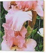 Pink Iris Wood Print by Claudette Bujold-Poirier