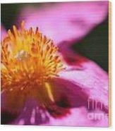 Pink Rockrose Wood Print
