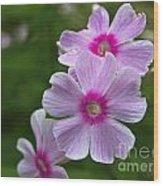 Pink Wood-sorrel  Wood Print