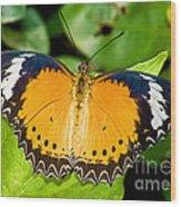 Plain Tiger Butterfly Wood Print
