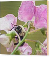 Pollination Nation II Wood Print