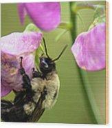 Pollination Nation V Wood Print