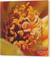 Portulaca In Orange Fading To Yellow Wood Print