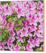 Pretty In Pink - Spring Flowers In Bloom. Wood Print