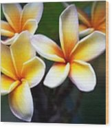 Pua Melia Wood Print