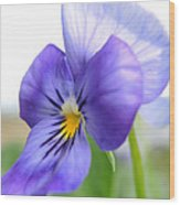 Purple And Blue Viola Wood Print