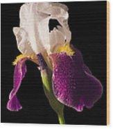 Purple And White Bearded Iris Wood Print