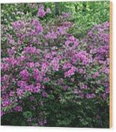 Purple Azaleas Wood Print