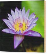 Purple Lotus  Wood Print