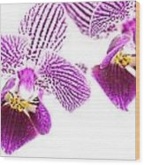 Purple Orchid-5 Wood Print