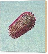 Rabies Virus Particle, Artwork Wood Print
