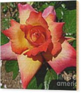 Rainbow Sorbet Rose Wood Print by Denise Mazzocco